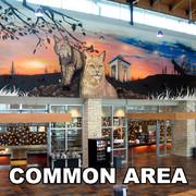 Eyeful Art Common Area Murals
